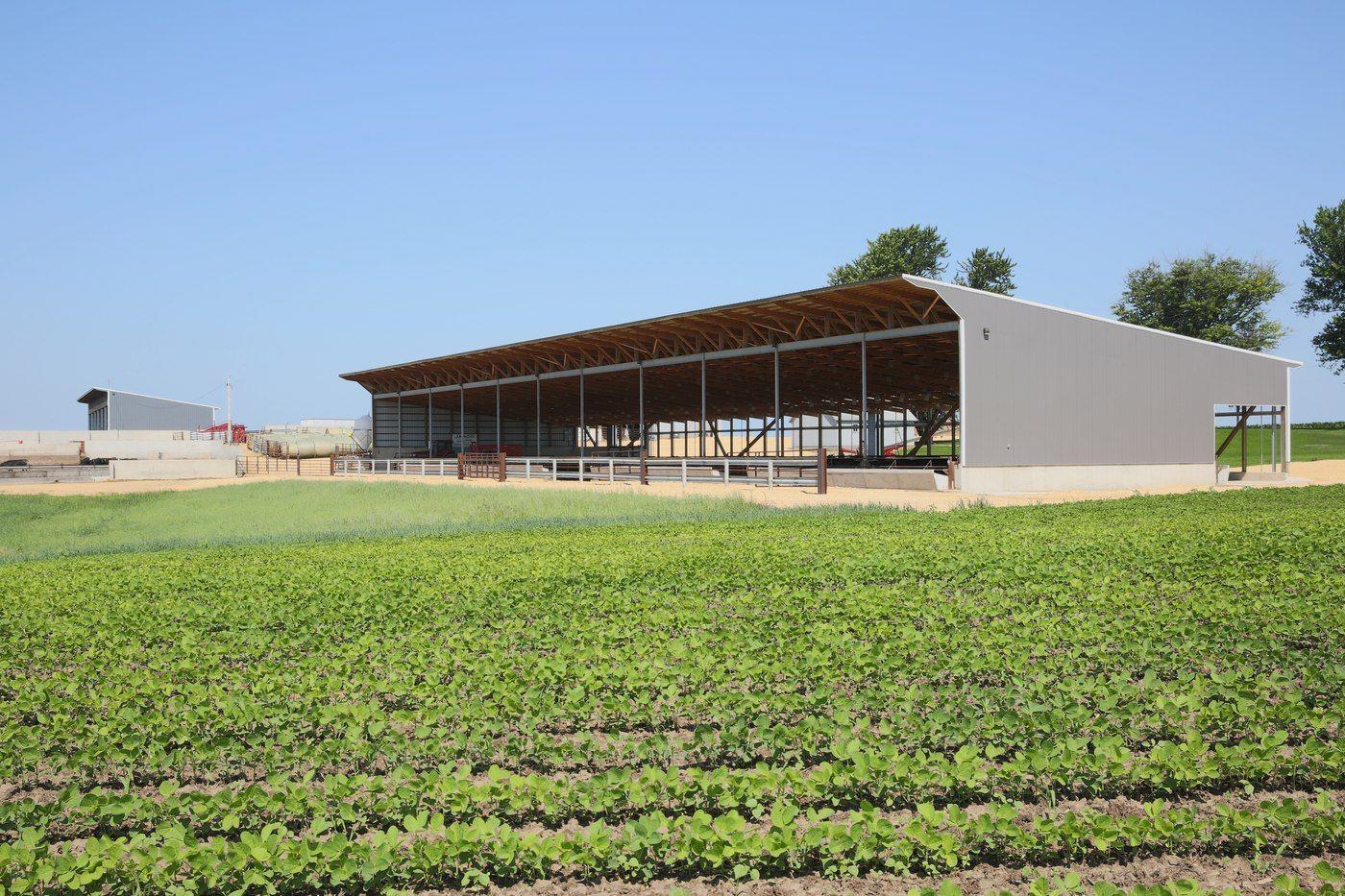 Ryan Jargo_Slatted Facility_Monoslope Beef Barns