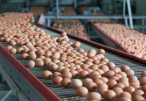 Commitment to Cage Free Eggs_Summit Livestock Facilities