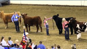 summit livestock facilities, monoslope beef barn, fair