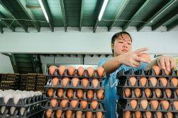 Summit EPC_Cage Free Eggs