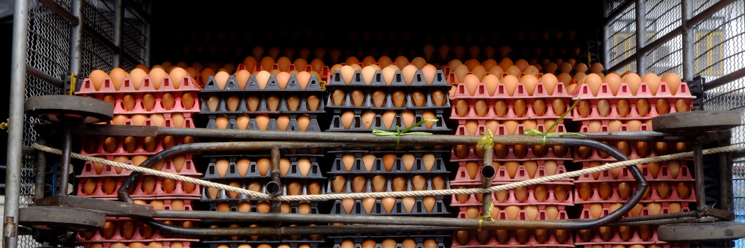 Labor Issues Challenge Poultry Industry
