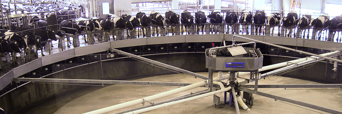 Removing automatic clusters earlier brings positive results for producers and cows