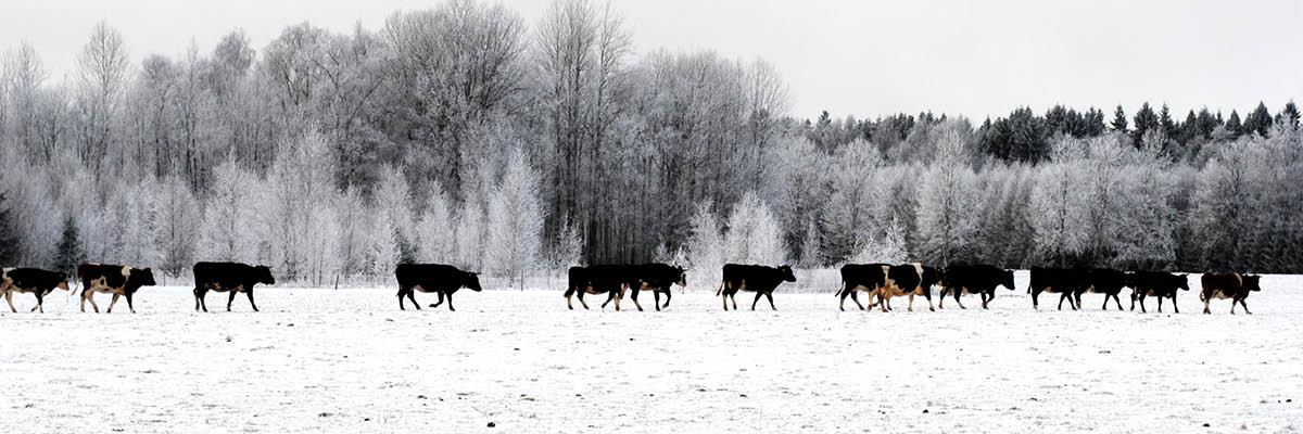 Winter is just around the corner
