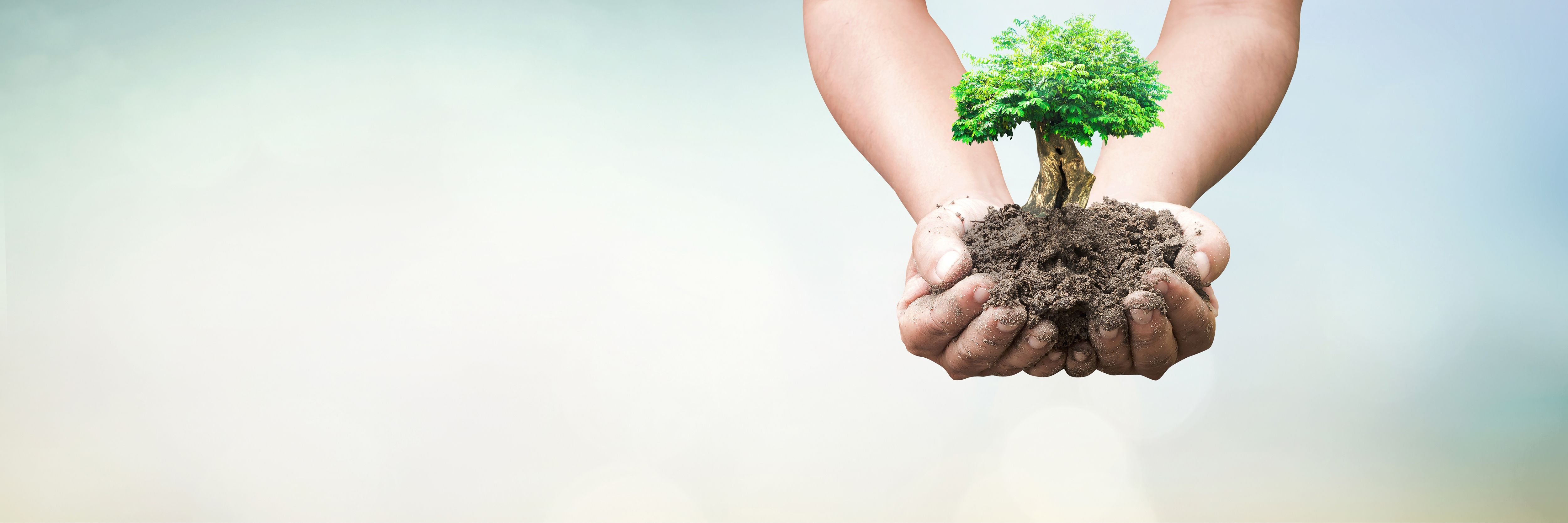 Will You Be Celebrating National Arbor Day?